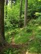 smiseny les
